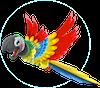 QCPH Parrot